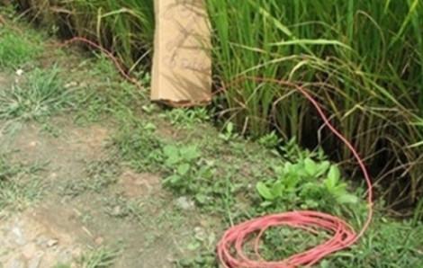 Sợ chuột phá vườn cà chua, người đàn ông bẫy điện khiến thiến niên 15 tuổi tử vong