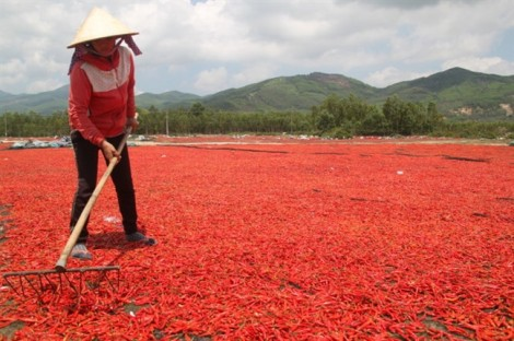 Hàng loạt mẫu ớt bột của Việt Nam chứa độc tố gây ung thư gan