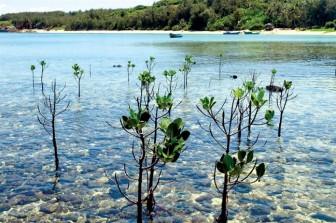 Đảo Phú Quý: Bí mật thiên đường nhiệt đới ở Bình Thuận