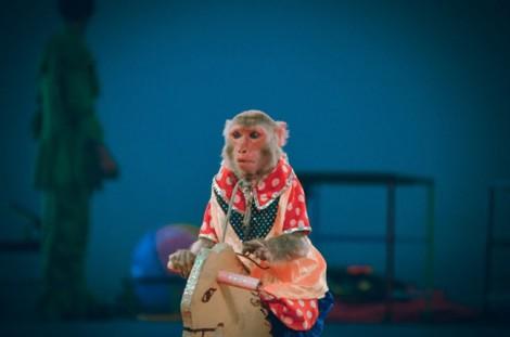 Đầm Sen tạm dừng biểu diễn xiếc thú đại trà trước đề nghị của Liên minh châu Á vì động vật