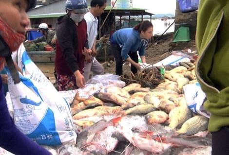 Hàng trăm tấn cá ở làng bè La Ngà chết đột ngột, nổi trắng mặt nước