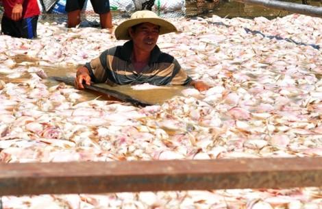 Công an vào cuộc vụ 1.500 tấn cá chết trắng sông La Ngà