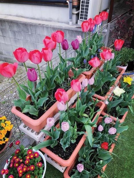 Hoa nở từ khu vườn người xa xứ