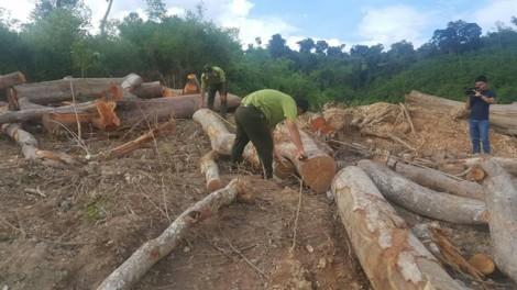 Hạt kiểm lâm phát hiện 2 vụ phá rừng đặc biệt nghiêm trọng