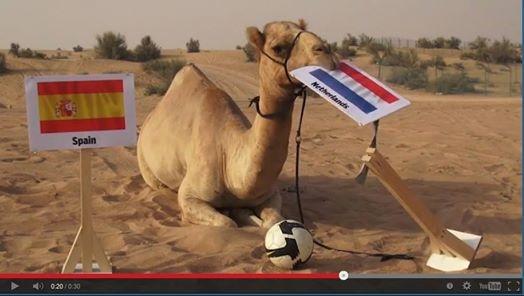 6 con vat duoc menh danh 'thanh doan' sieu pham ket qua World Cup