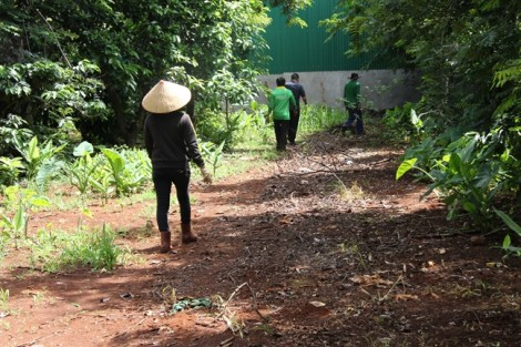 Người dân khốn đốn vì đường vào chăm sóc hàng trăm hecta cà phê bị chặn lối