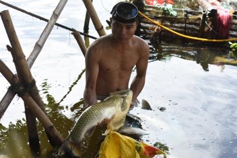 Dân 'tố' cá chết do thủy điện không xả nước