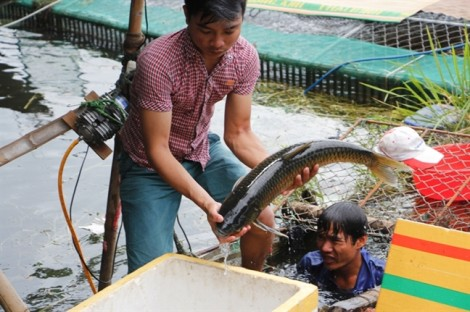 Yêu cầu thủy điện xả nước để cứu cá lồng bè, giảm thiệt hại cho người dân