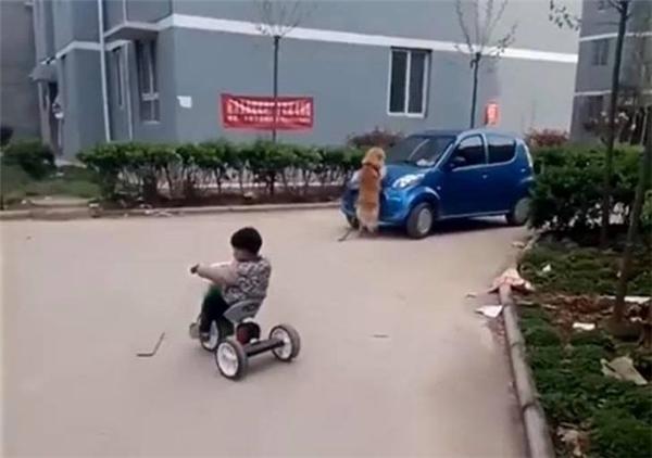 Chu cho bo an buon tham khi chu mat: mot tinh cam rung dong long nguoi