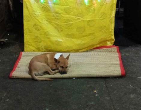 Chú chó bỏ ăn buồn thảm khi chủ mất: một tình cảm rung động lòng người