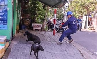 TP.HCM tang cuong giam sat benh dai tren nguoi
