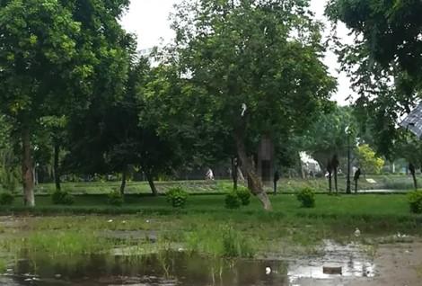 Người đàn ông treo cổ ở hồ Đền Lừ, Hà Nội