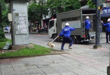 Ra quân bắt chó thả rông trên địa bàn quận 1