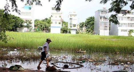 TP.HCM chấp thuận cho 31 dự án chuyển mục đích sử dụng đất trồng lúa