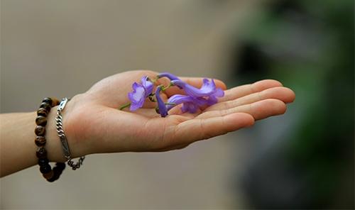 Trai tim hoa da se hoi sinh