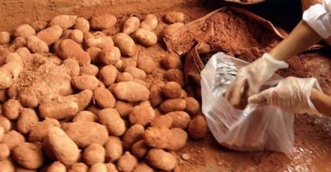 Nhuộm đất đỏ Đà Lạt lên khoai tây Trung Quốc