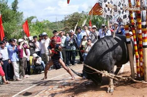 Yêu cầu tạm dừng việc thu tiền dân để tổ chức lễ hội đâm trâu ở Huế