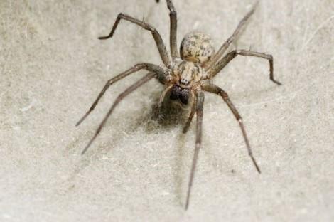 Kinh hoàng nhện giăng tơ trong lỗ tai người
