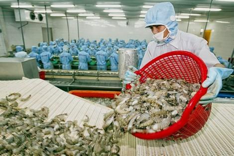 Mỹ giảm mạnh mức thuế chống bán phá giá tôm Việt Nam