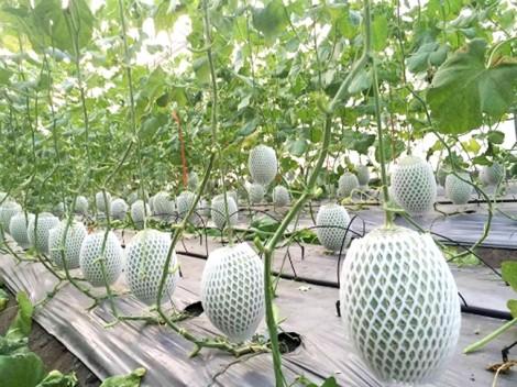 Bài 8: Nông nghiệp hữu cơ - muốn tiến xa, cần nhiều bạn đồng hành