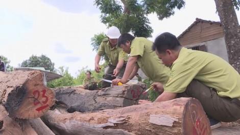 Khởi tố đội trưởng kiểm lâm nhận hàng trăm triệu đồng của trùm gỗ lậu Phượng 'râu'