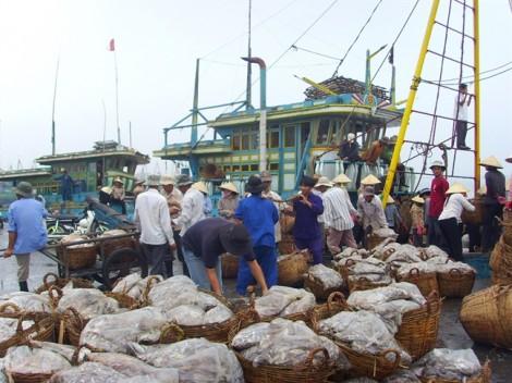 Khó xóa thẻ vàng IUU cho hải sản xuất vào châu Âu