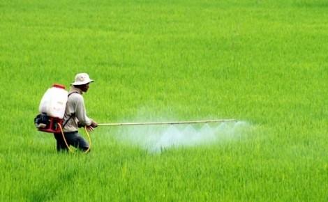 Kiên quyết loại bỏ các hoạt chất bảo vệ thực vật có hại