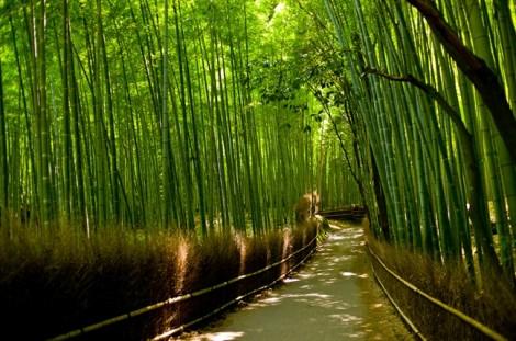 10 khu rừng đẹp nhất thế giới (phần 1)