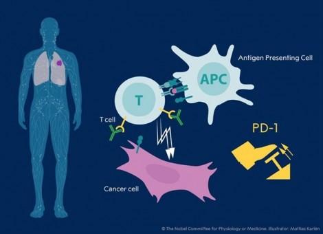 Phương pháp điều trị kiểm soát miễn dịch ung thư đã có ở TP.HCM?