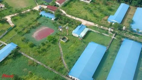 Đồng Nai: Doanh nghiệp sẽ tự tháo dỡ trại heo xây không phép