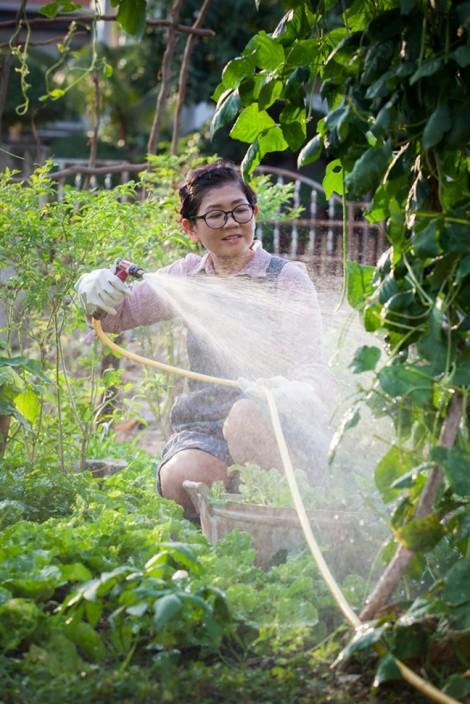 Rau vợ trồng