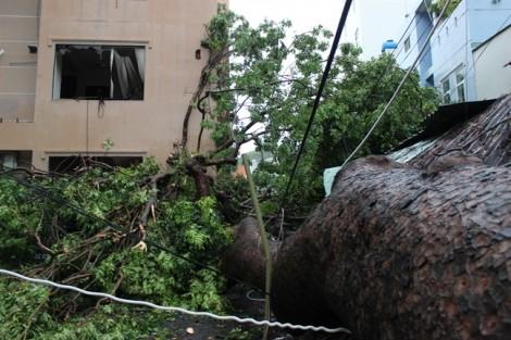 Bão số 9: Vũng Tàu, Bình Thuận tàu chìm, cây ngã; đường sắt tê liệt từ Khánh Hoà đi TP.HCM