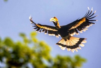 Chim quý gây xôn xao mạng xã hội xuất hiện ở Sài Gòn