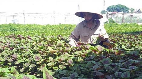 Tiêu chuẩn nông sản an toàn: Ai tin, tin ai?
