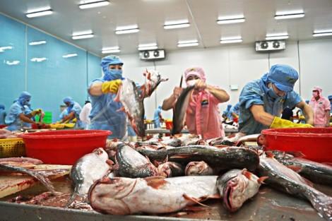 Cá tra không thua cá tầm, cá hồi, sao người Việt không chuộng?