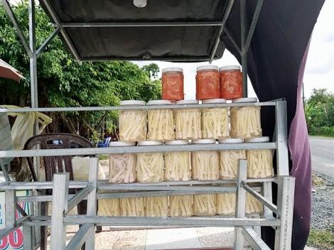 Từ cây hoang bỏ đi, bồn bồn đem bạc triệu về cho người Cà Mau