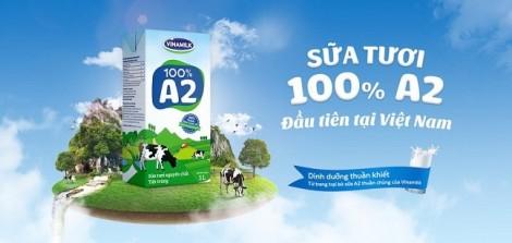 Câu chuyện về sữa tươi 100% A2