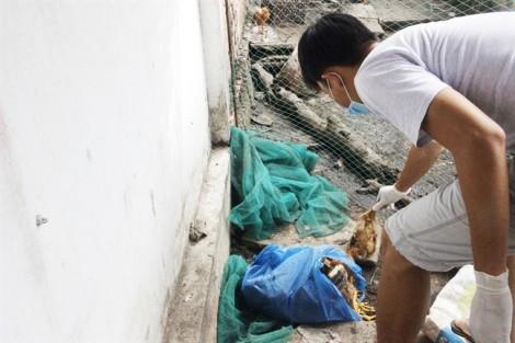 Gia cầm chết hàng loạt ở Long An: Phát hiện cúm H5N1