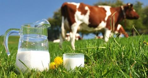 Trẻ có thể uống phải sữa bò tồn dư thuốc kích dục