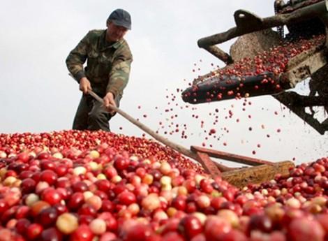 Nông sản xuất khẩu nhiều vẫn khó vào siêu thị trong nước