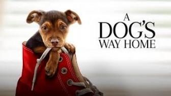 'Đường về nhà của cún con': Khi tình yêu thương là cốt lõi