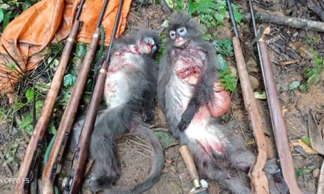 Bắt 5 đối tượng bắn chết 2 cá thể voọc xám quý hiếm, trong đó 1 con đang mang thai