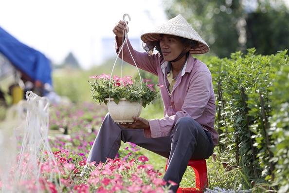 Nong dan Sai Gon tat bat cham soc hoa cho thi truong tet