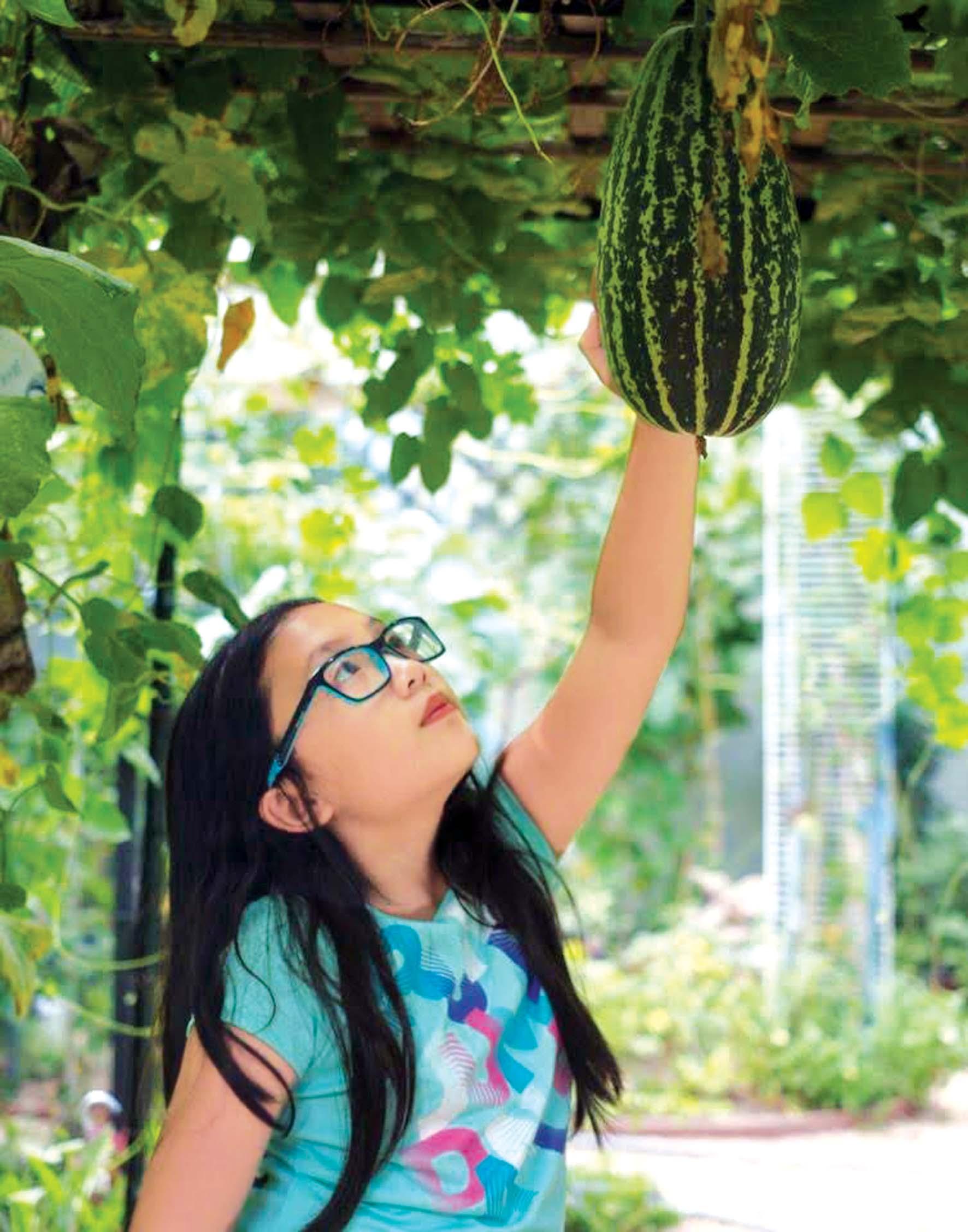 """""""bứng"""" nhà rời khỏi Huế, cha mẹ tôi lại tạo nên một khu vườn, gieo trồng rau trái Việt ngay giữa tiểu bang Texas - Hoa Kỳ"""