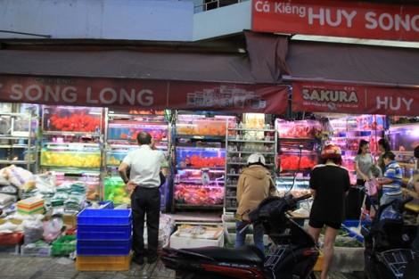 Người Sài Gòn mua cá chép Koi 500.000 đồng/con để đưa ông Táo