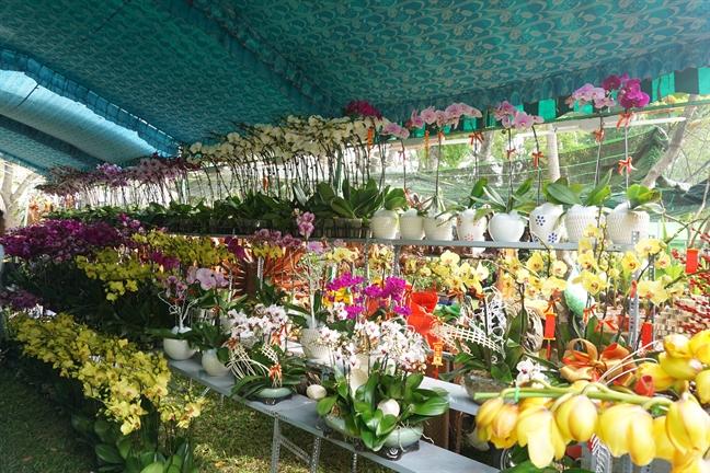 Thuong lam hoa xuan tai cho hoa Tet