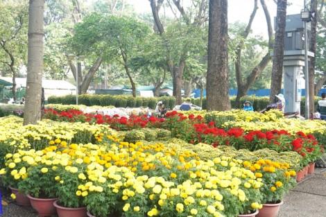 Thưởng lãm hoa xuân tại chợ hoa Tết