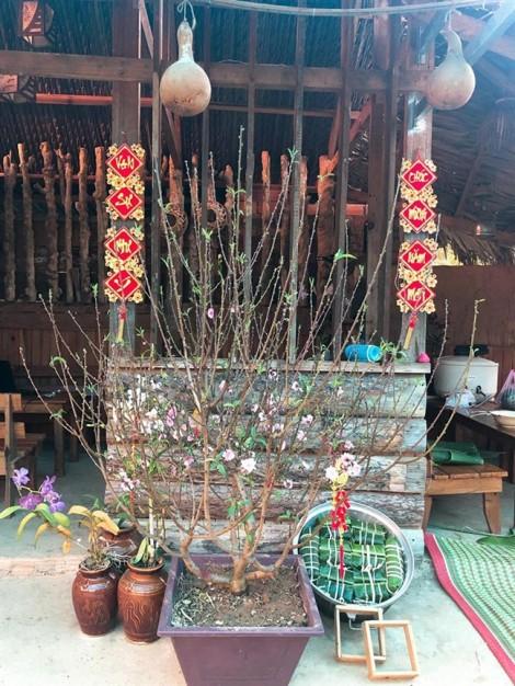 'Check in tết' từ ngoại ô Đà Lạt: Chiều cuối năm ấm sực