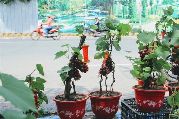 Nho kieng chung tet hut khach tai Sai Gon