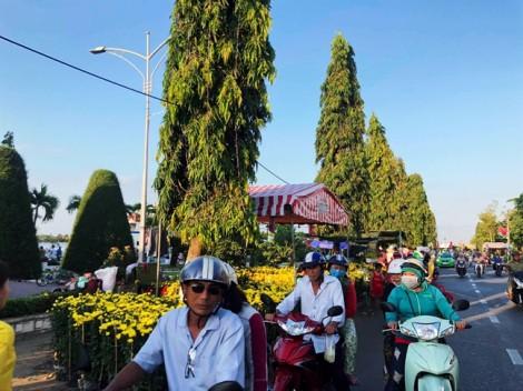 'Check in tết' từ Vĩnh Long: Mai vàng khoe sắc bên sông Tiền